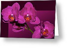 Framed Orchids Greeting Card