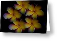 Frangipani Circle Of Color Greeting Card