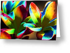Frangipani Flowers Of Color Greeting Card
