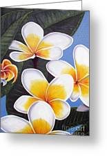 Frangipani I Greeting Card