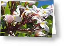 Frangipanier - Plumeria - Ile De La Reunion - Reunion Island Greeting Card
