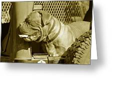 Frank The Dog 7827 In Sepia Greeting Card