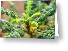 Frankincense Tree Leaves Greeting Card