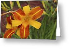 Frans Hals Daylily Greeting Card