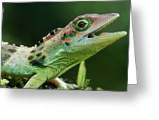 Frasers Anole Anolis Fraseri Male Greeting Card