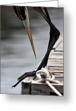Fred The Great Blue Heron Greeting Card