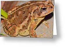 Freddie The Frog Greeting Card