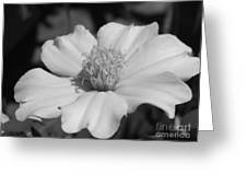French Marigold Named Disco Yellow Greeting Card
