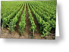 French Vineyard Greeting Card