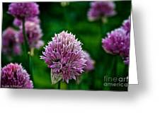 Fresh Chives Greeting Card