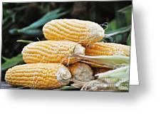 Fresh Corn Greeting Card