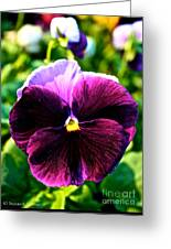 Fresh Face Pansy Greeting Card