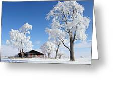 Fresh Frost Greeting Card