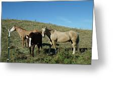 Fresh Horses Greeting Card