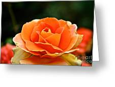 Fresh Peach Petals Greeting Card