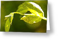 Fresh Peas Greeting Card by Artist and Photographer Laura Wrede
