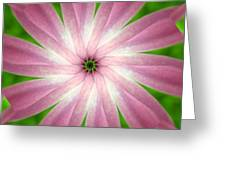 Fresh Pink Greeting Card