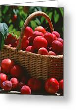Fresh Red Plums In The Basket Greeting Card