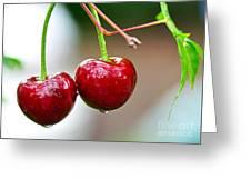 Fresh Wet Cherries Greeting Card