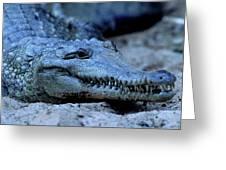 Freshwater Crocodile Greeting Card