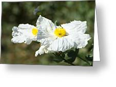 Fried Egg Flowers Greeting Card