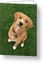 Friendly Dog Greeting Card