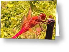 Friendly Dragon Fly Greeting Card