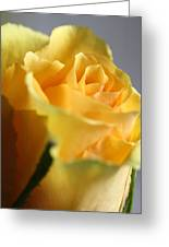 Friendship Rose Greeting Card by Mark J Seefeldt