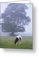 Friesian Cow, Ireland Greeting Card