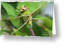 Fringes Of Life Greeting Card