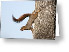 Frisky Little Squirrel With A Twirly Tail Greeting Card by Bonnie Barry