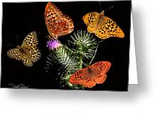 Four Fritillaries Greeting Card