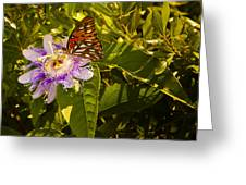 Fritillary On A Passion Flower  Greeting Card