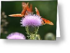 Fritillary Wings And Thistles Greeting Card