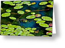 Frog And Lily Pads Greeting Card