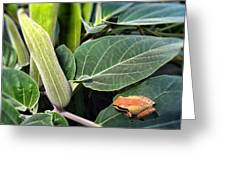 Frog And Moonflower Greeting Card