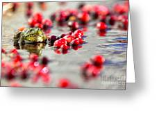 Frog At A Cape Cod Cranberry Bog Greeting Card