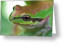 Frog Close Up 1 Greeting Card