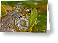 Frog Eye Greeting Card