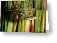 Frog Jumps Into Water Greeting Card by Ted Kinsman