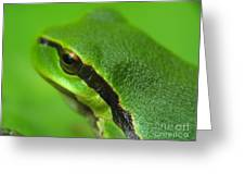 Frog Look Greeting Card by Odon Czintos