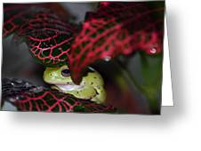 Frog On A Leaf Greeting Card