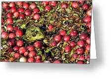 Frog Peaks Up Through Cranberries In Bog Greeting Card