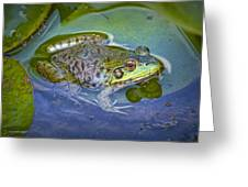 Frog Resting On A Lily Pad Greeting Card