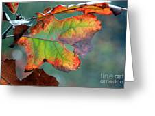 From Greeen To Rust Greeting Card