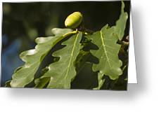 From Little Acorns Greeting Card