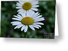 Front Focus Greeting Card