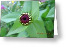 Front Of A Bud Greeting Card
