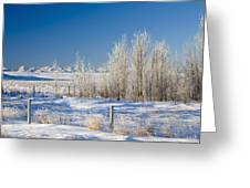Frost-covered Trees In Snowy Field Greeting Card