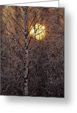 Frost-covered White Birch Trees Greeting Card